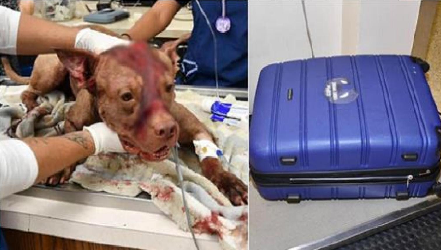 Encuentran un cachorro apuñalado escondido en una maleta y dado por muerto en un edificio descuidado