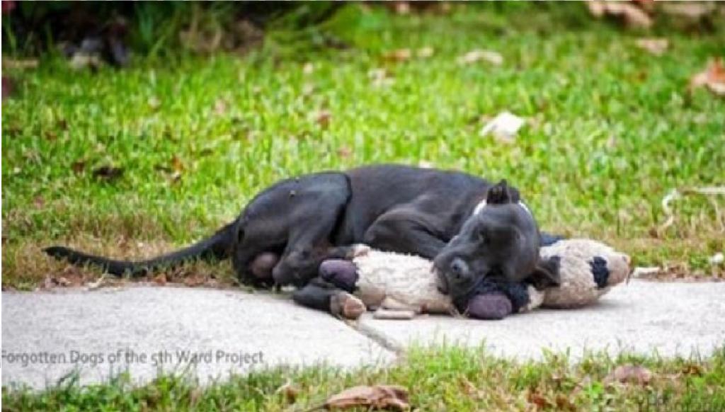 Abandonado por sus crueles dueños, este perro encuentra consuelo en la calle gracias a su juguete