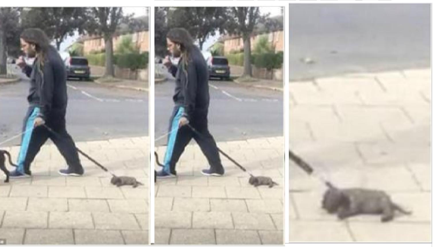 Perro agotado es arrastrado por su dueño durante el paseo